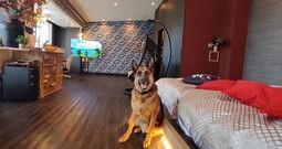 大切なペットとゆったりと 愛犬のためのリゾート型温泉旅館【箱根/箱根強羅グアムドッグ本店】